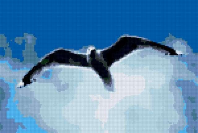 Чайка в небе, предпросмотр