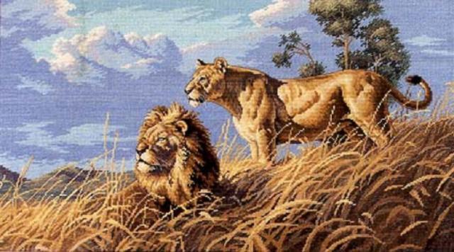 Лев и львица , оригинал