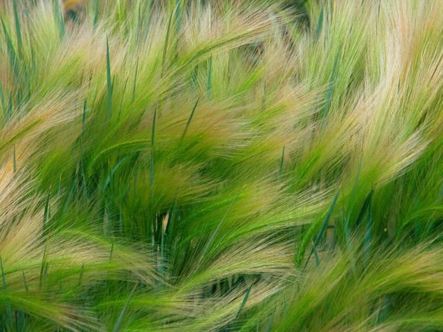 Травы, травы, травы...
