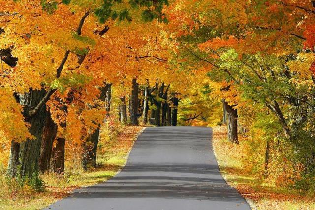 Золотая осень, природа. пейзаж