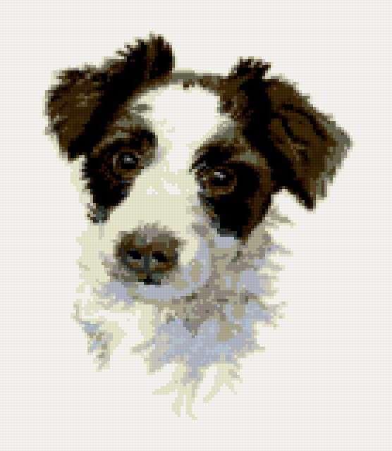 Портрет пса, предпросмотр
