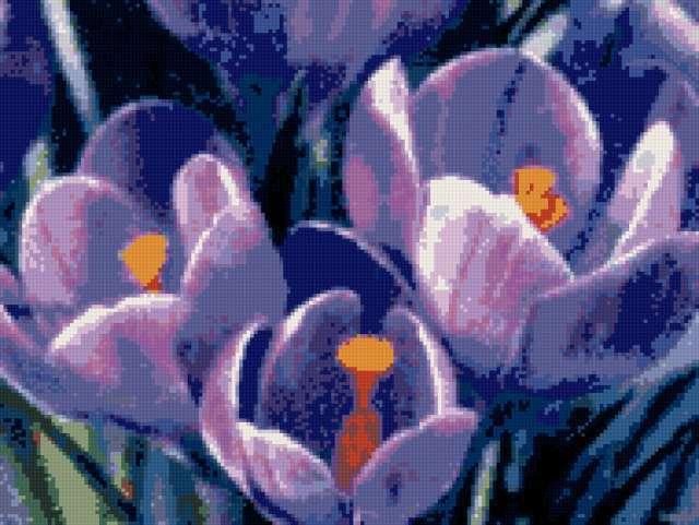 Крокусы, цветы, весна, крокусы