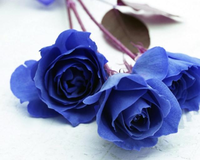 Вышивка розами схемы