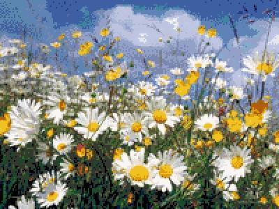 Ромашковое поле, цветы, поле,