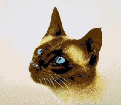 Сиамская кошка, кошка