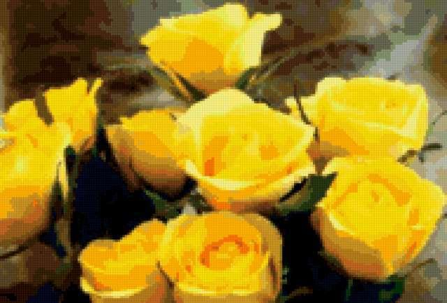 Желтые розы, цветы, розы