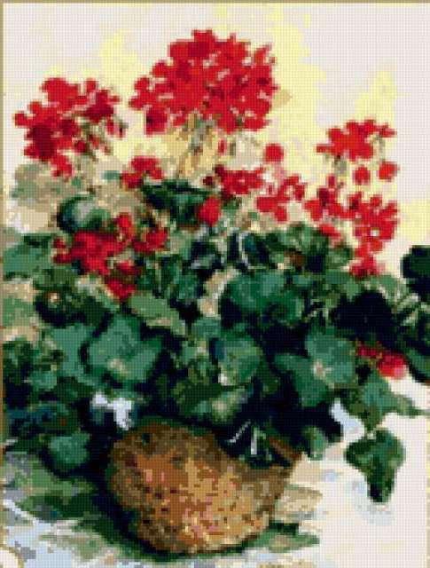 Герань, цветы, ваза, герань