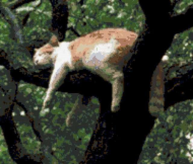 Кошка на дереве, дерево, кот.