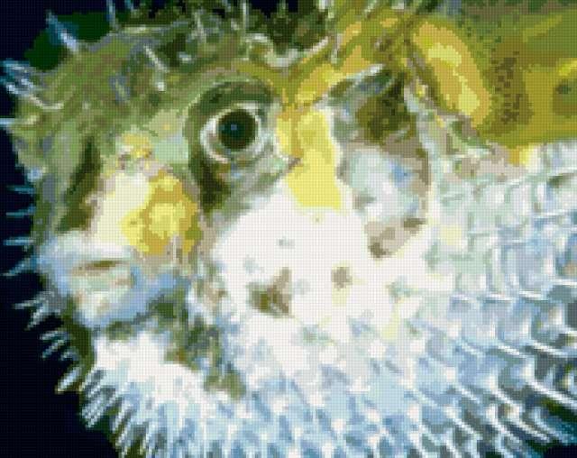 Морские обитатели 31
