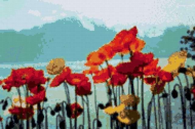 Маки у воды, цветы, маки,