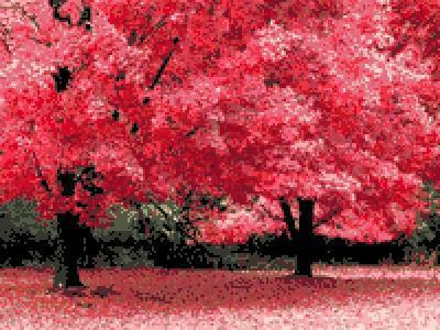 Осенняя фантазия, при рода.
