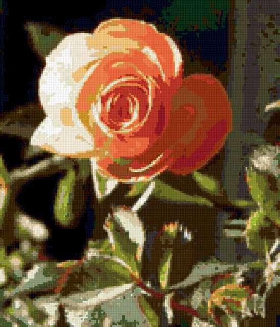Розовая роза, предпросмотр