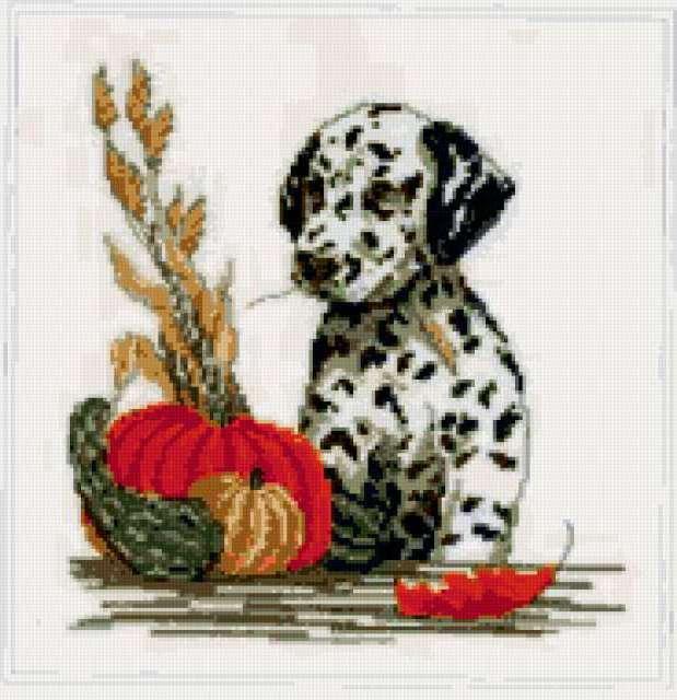 Далматинец, щенок, портрет