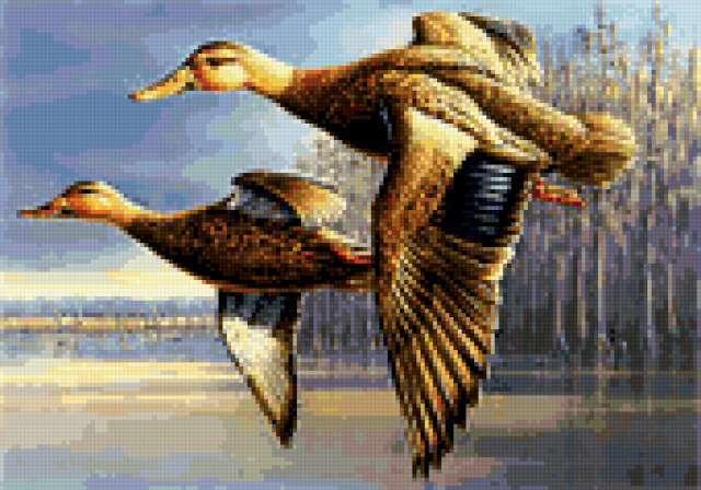 Летят утки..., птицы, утки,
