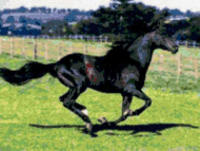 Бег коня, животные, лошади,