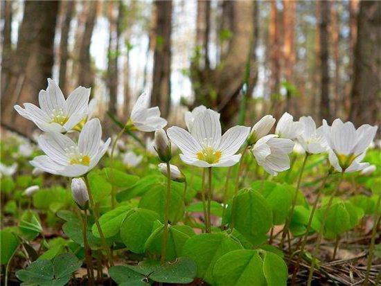 Весенний лес, оригинал