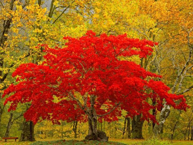 Осенний пожар, оригинал