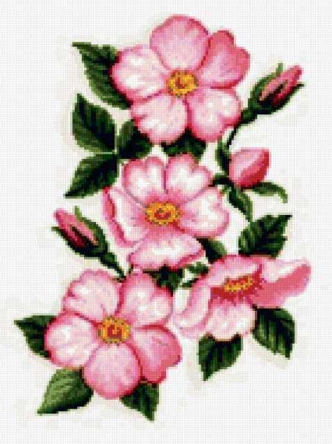 Цветы яблони, предпросмотр