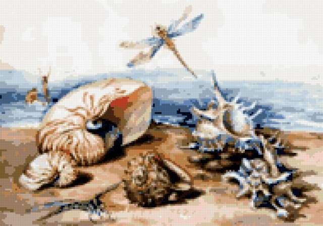 Ракушки, предпросмотр