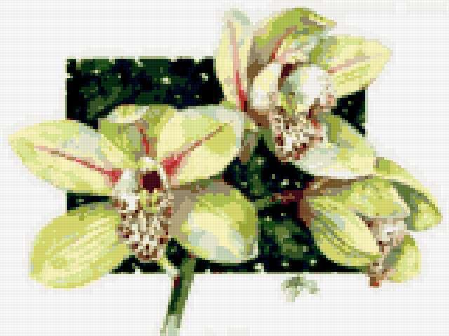 Акварель орхидеи, цветы