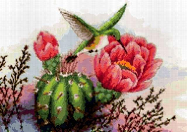 Колибри и кактус, колибри,