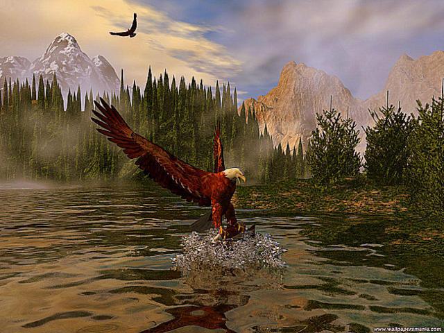 Орел, орел, птица, рыба,