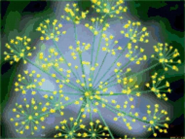 Звездочка, цветы