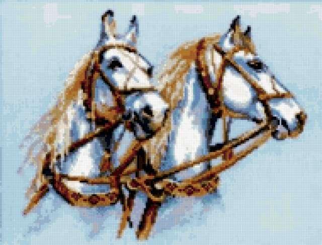 Пара белых лошадей, животные,