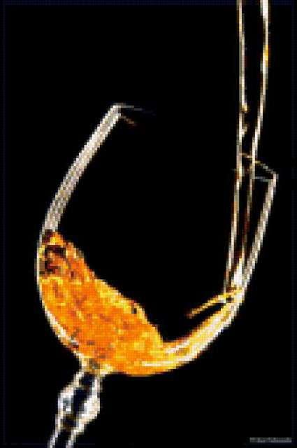 Золотой напиток, предпросмотр