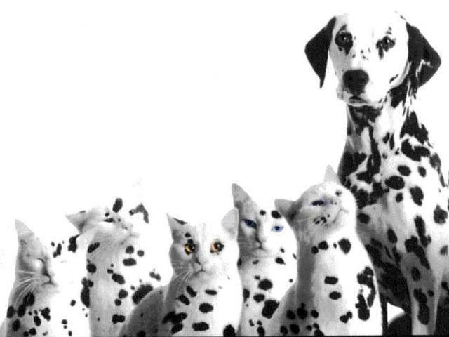 Генная инженерия, коты, собаки