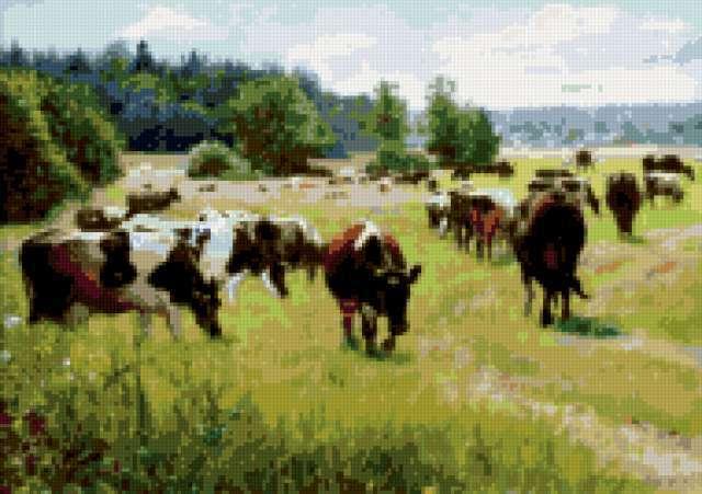 Коровы на выгуле, предпросмотр