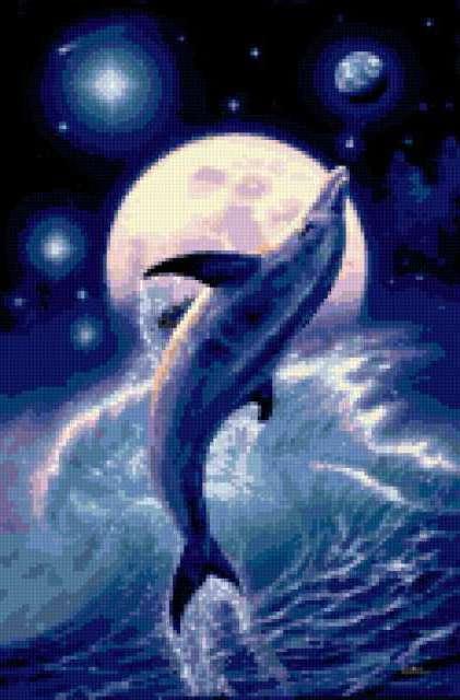 Дельфин, предпросмотр