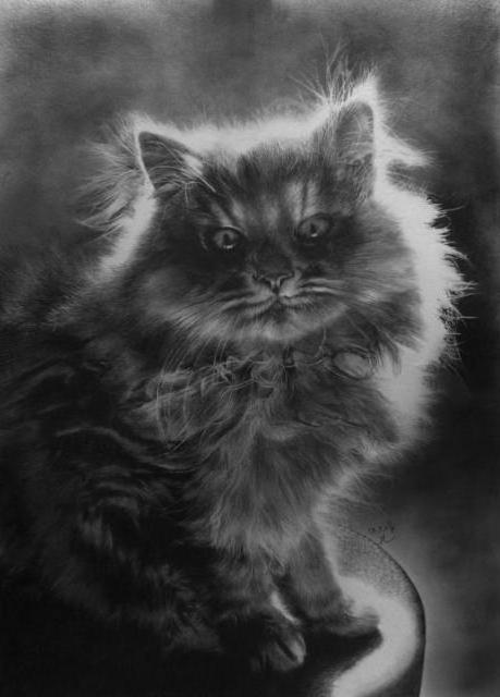 Персидский котик, оригинал