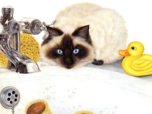 коты, кошки, животные,