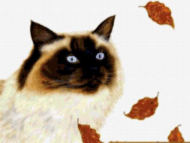 Сиамский кот 2, предпросмотр