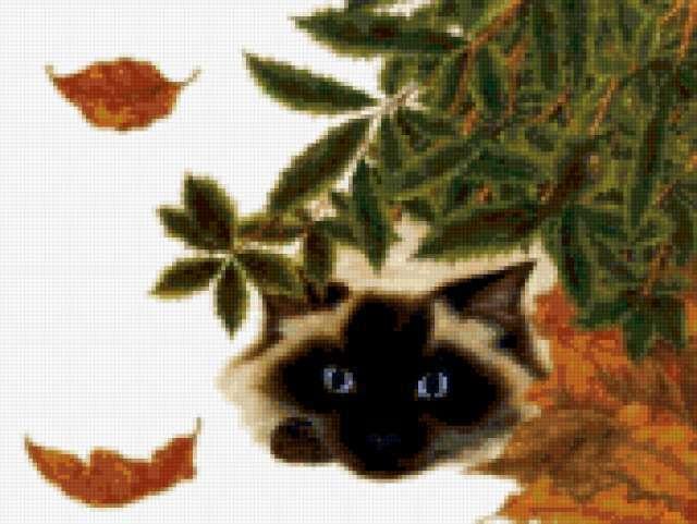 Сиамский кот 4, предпросмотр