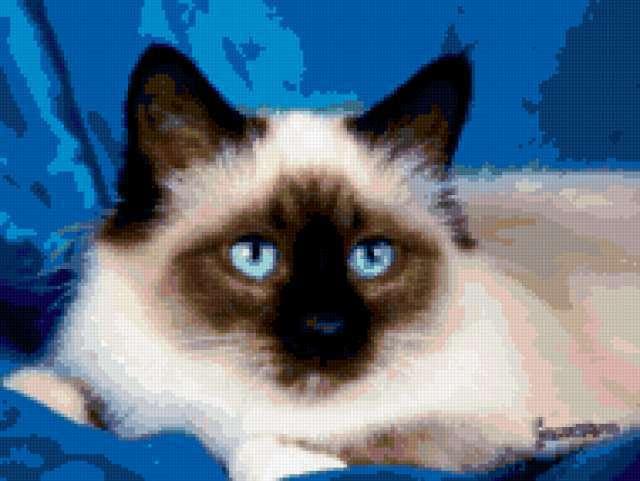 Сиамский кот 5, предпросмотр