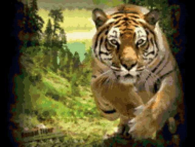 Прыжок бенгальского тигра