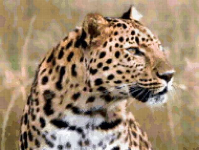 Голова ягуара, предпросмотр
