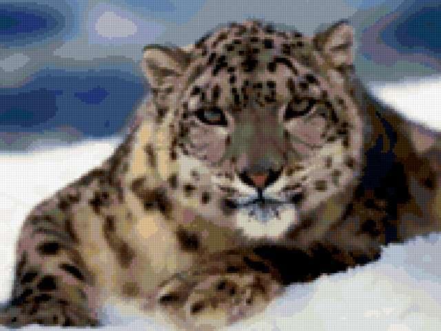 Ягуар на снегу, предпросмотр