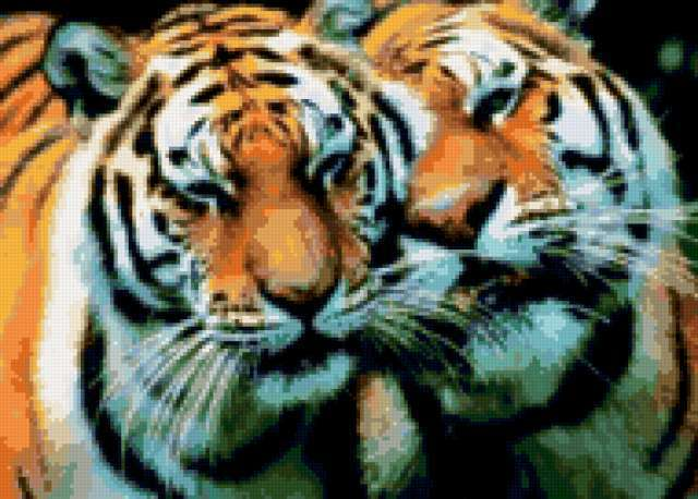 Пара тигров 1, предпросмотр