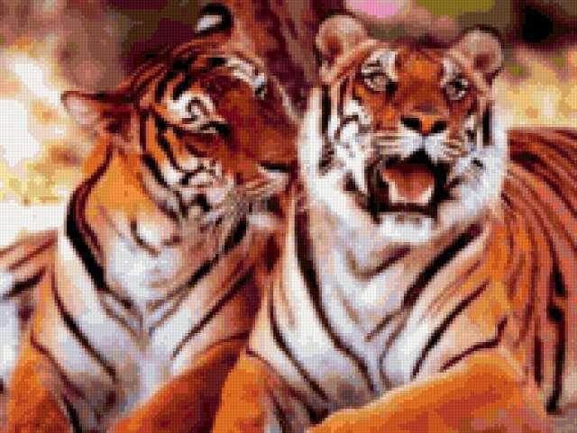 Пара тигров 2, тигр, тигры,