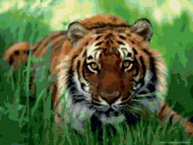 Тигр в траве, тигр, тигры,