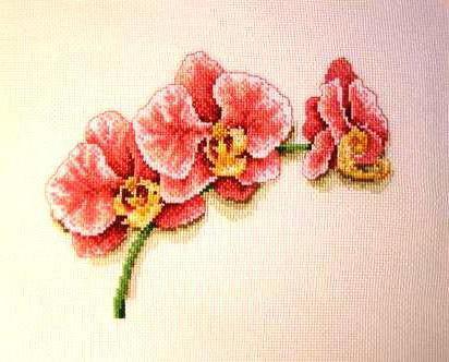 Веточка орхидеи, орхидея