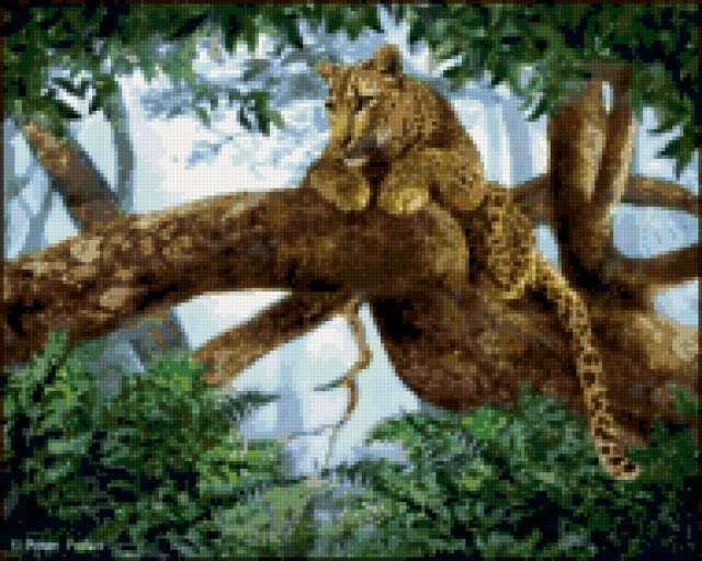 Пантера в джунглях