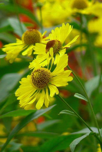Жёлтые цветы, оригинал