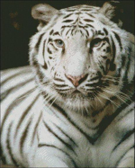 Белый Усурийский Тигр
