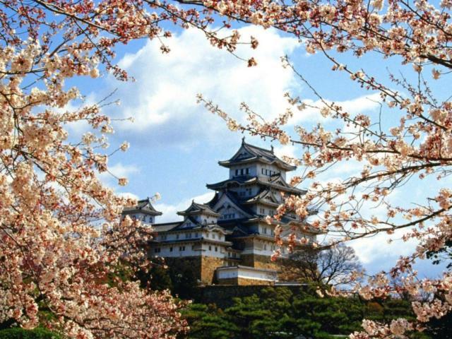 Япония, страны, пагода, сакура