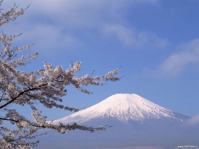 Гора Фудзияма и цветение