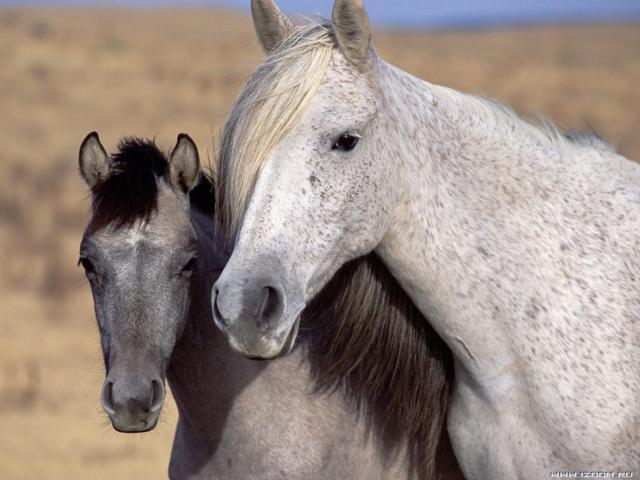Лошадь с жеребенком, животное,